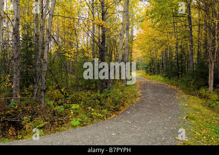Path through forest in autumn Chugach State Park Southcentral Alaska - Stock Photo