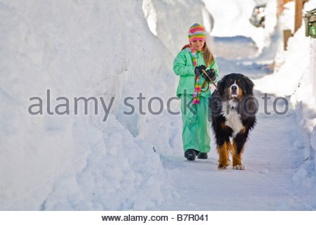 Bernese Mountain Dog Picture Butte