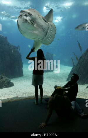 Moon fish at Lisbon`s Oceanarium, in the Expo 98 site of Parque das Nações. - Stock Photo