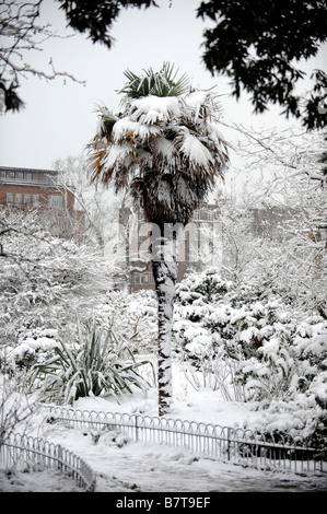 Snow on a palm tree in Brighton UK February 2009 - Stock Photo
