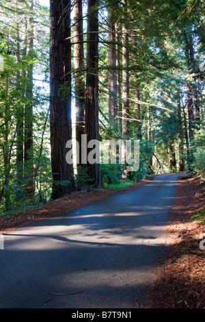Narrow road lined by redwood trees near the Big Sur Lodge, Julia Pfeiffer Burns State Park, Big Sur coast, California, - Stock Photo