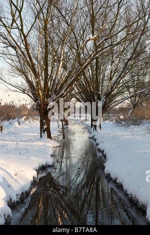Krefeld, Niepkuhlen, Naturschutzgebiet, Niederrheinlandschaft mit Kopfweiden und Bach im Schnee - Stock Photo