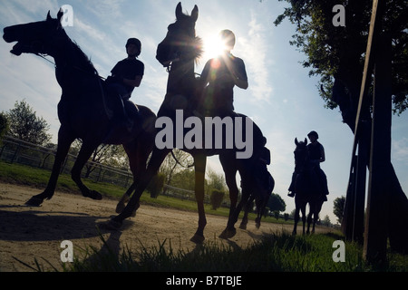Racehorses in silhouette, Newmarket Suffolk, England - Stock Photo