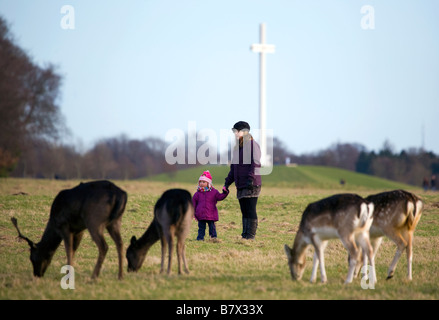 Mother and daughter look at Fallow Deer Dama dama grazing on the 15 acres in the Phoenix Park Dublin with the papal - Stock Photo