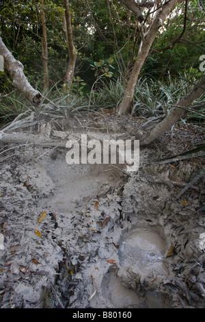 A bubbling mud pot along Las Pailas trail in the Parque Nacional Volcano Rincón de la Vieja near Liberia in the - Stock Photo