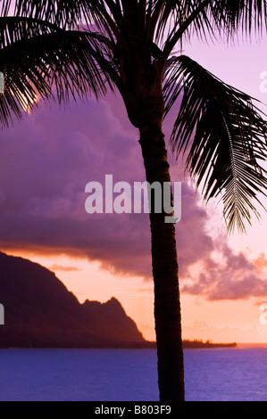Palm tree and the Na Pali Coast at sunset Island of Kauai Hawaii - Stock Photo