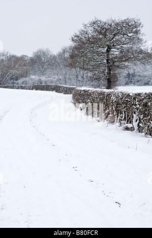 A winter landscape. - Stock Photo