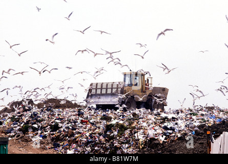 Seagulls surround a yellow bulldozer as it shifts rubbish on a landfill site in the UK - Stock Photo