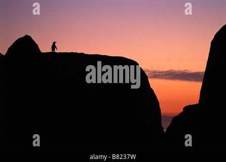 African penguin (Spheniscus demersus) lone penguin at sunset, Cape Peninsula, South Africa - Stock Photo