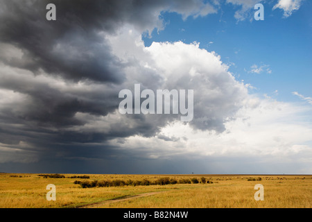 Storm clouds move over the vast wide open plains of the Serengeti in the Masai Mara Reserve, Kenya. - Stock Photo