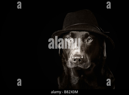 Black and White Image of a Labrador in a Hat - Stock Photo