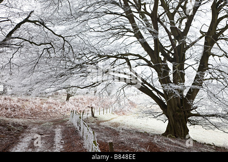 Farm track in winter with hoar frost on trees and fence Wales UK - Stock Photo