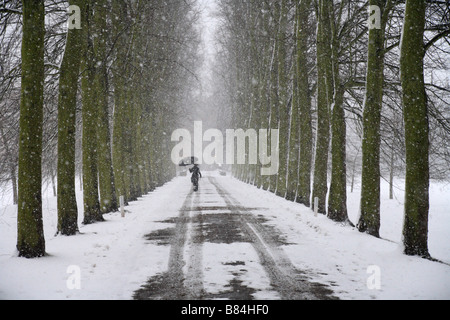 Single person with umbrella on a 'Tree lined' 'Avenue' in the snow, Trinity College, Cambridge University, England, - Stock Photo