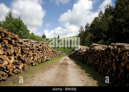 Main track with logs destined for biofuel stacked either side at Craig yr Aber in Bridgend County Borough South - Stock Photo
