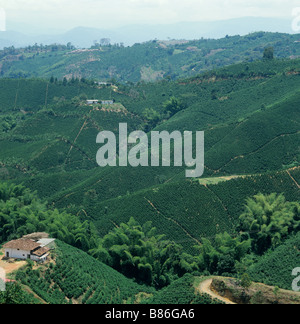 Lowland coffee plantations without shade trees in Colombia South America - Stock Photo