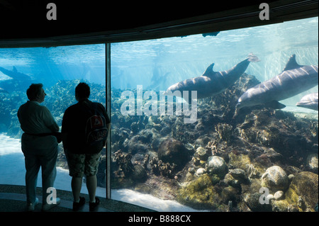 Underwater viewing area at Dolphin Cove, Sea World, Orlando, Central Florida, USA - Stock Photo