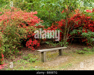 Red Acers At Exbury Gardens New Forest England Stock Photo