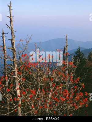 NORTH CAROLINA - View from Clingmans Dome in Great Smoky Mountains National Park. - Stock Photo