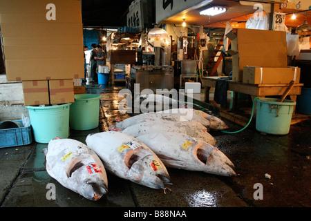 Frozen tuna at Tsukiji fish market, Tokyo - Stock Photo