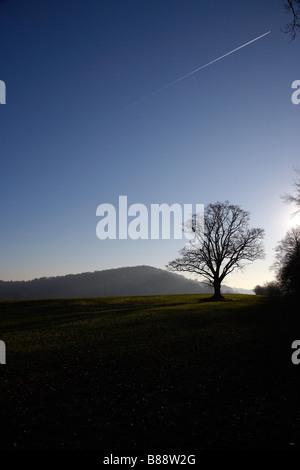 Oak Tree in Evening Sky near Goodrich Castle, Herefordshire, England, UK - Stock Photo