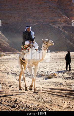 Bedouin riding on a camel, Dahab, Egypt - Stock Photo