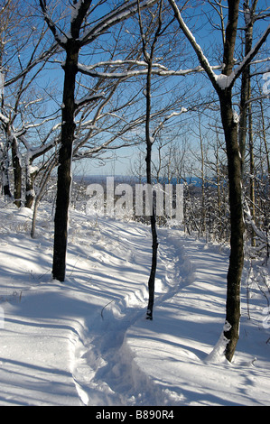 Snowshoe trail on top of Oberg Mountain, Minnesota's North Shore. - Stock Photo