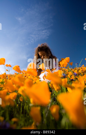 little girl 7 years old picking california poppies off of a hillside in lake elsinore riverside county california - Stock Photo
