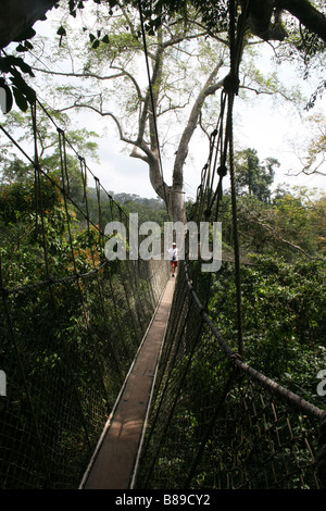 Ghana Kakum National Park canopy walk - Stock Photo