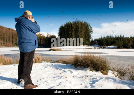 A birdwatcher photographing the feeding of the red kites at Nant yr Arian forest centre mid wales UK - Stock Photo