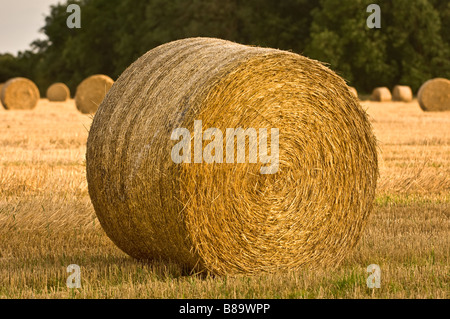 Hay bale in harvested field - Stock Photo