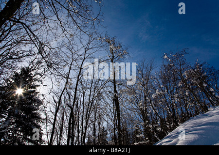 Sun shining through snow covered trees and foliage - Stock Photo