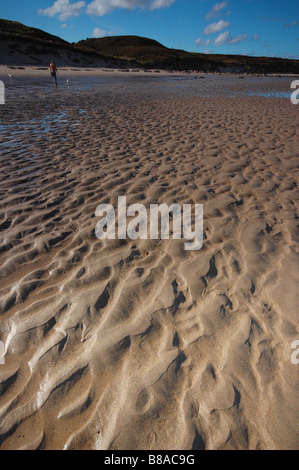 Man walks his two dogs on a deserted beach in Northumberland on a summer's day - Stock Photo