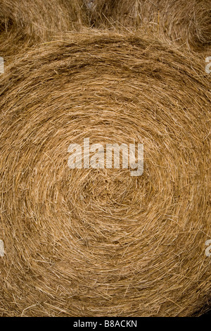 Close up of big bales on Farm in Weardale Co . Durham - Stock Photo