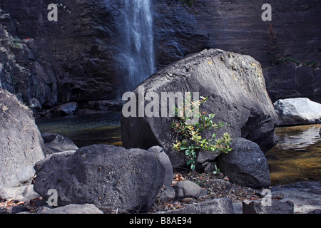 landscape- a plant on foreground and watrefall on background - Stock Photo