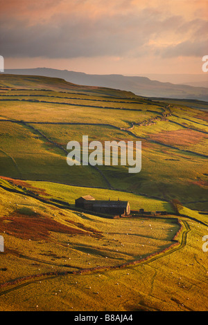 evening light on the stone walls and a farms of Wharfedale, nr Kettlewell, Yorkshire Dales National Park, England, - Stock Photo