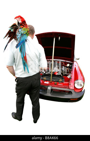 MG red classic car talking parrot history vehicle vintage antipodes symbol collector age golden motoring transport - Stock Photo