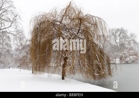 Weeping willow tree beside the lake in snow covered St James's Park London England UK - Stock Photo