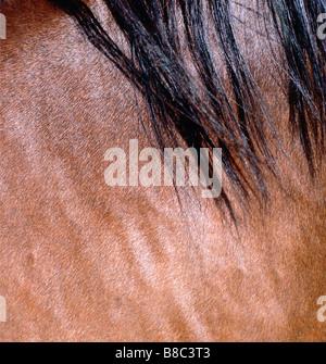 Close up  Horse Mane - Stock Photo