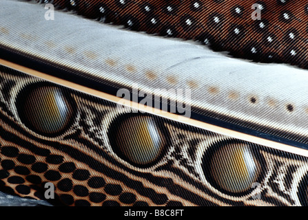 GREAT ARGUS PHEASANT - Stock Photo
