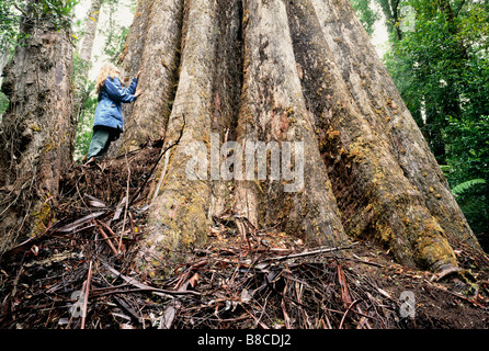 Tree zozed for logging - Stock Photo