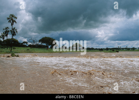 TARANGIRE IN FLOOD - Stock Photo