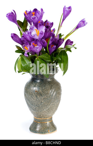 Spring holiday crocus flowers in vase isolated on white background - Stock Photo