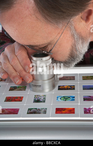 Viewing slides on a light table - Stock Photo