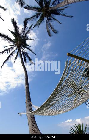 Empty Hammock against Sky  Palm Trees, Maui, Hawaii - Stock Photo
