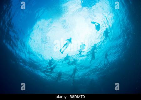 Scuba divers in sea - Stock Photo