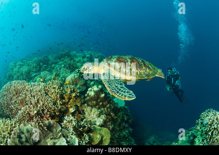 Sea turtle and scuba diver - Stock Photo