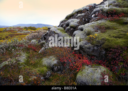 Lava and moss landscape, autumn, Thingvellir National Park, Iceland - Stock Photo