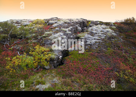 Autumn lava with cracks, at Thingvellir National Park, Iceland - Stock Photo