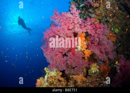 Scuba diver and coral reef around Brother Islands, Red Sea. - Stock Photo