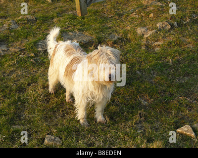 dog standing in a field - Stock Photo